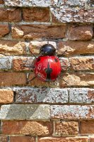 Smart Garden Hangers On Medium Ladybird