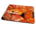 Kico Animal Placemat - Orange Snake