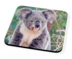 Kico Animal Coaster - Koala Bear