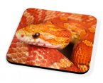 Kico Animal Coaster - Orange Snake