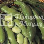 Thompson & Morgan Broad Bean : The Sutton