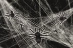 Premier Decorations Halloween Spider Web with 4 Spiders