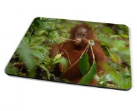 Kico Animal Placemat - Monkey In Trees