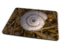 Kico Nature Placemat - Snail Shell