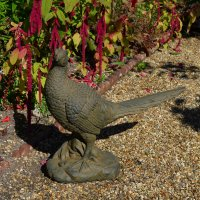 Solstice Sculptures Pheasant 49cm Rust Effect