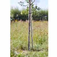 Tree Stakes - Softwood Round 120cm