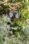 Smart Garden Whimsical Butterfly Brilliance Stake - Blue