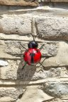 Smart Garden Hangers On Large Ladybird