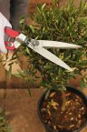 Kent & Stowe Single Handed Grass Shears